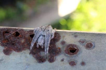 Folded spider