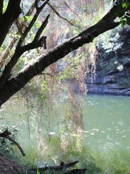 Nepean River for Haiku