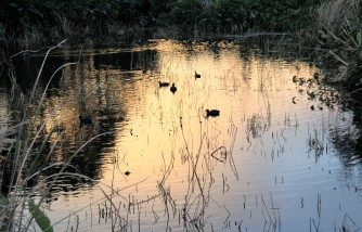 duck pond evening